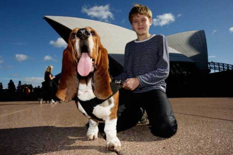 Владельцы и их собаки наслаждаются музыкой Лори Андерсона. Фото: Brent Stirton/Getty Images
