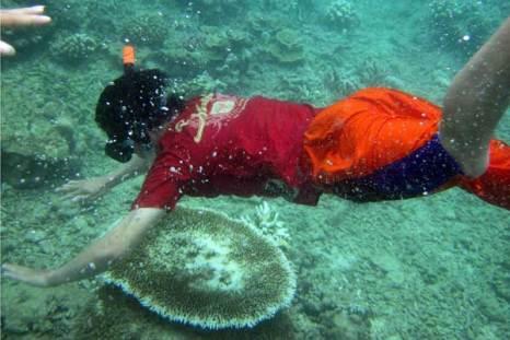 Исследование кораллов на предмет их обесцвечивания, которое губительно для них. Фото: CHAIDEER MAHYUDDIN/AFP/Getty Images