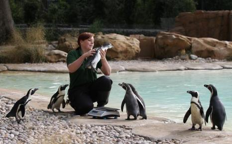 Процедура взвешивания питомцев в Лондонском зоопарке. Фото: Oli Scarff/Getty Images