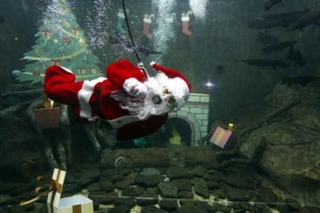 Человек в одежде Санта Клауса совершает подводное погружение в аквариуме зоопарка в Гвадалахаре, Мексика, 16 декабря 2012 г. Фото: Hector Guerrero/AFP/Getty Images