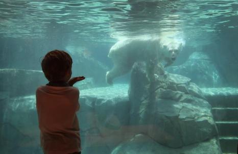 Чикагский Brookfield Zoo США спасает животных от жары с помощью больших кусков льда 18 июля 2013 года, когда температура воздуха превысила 32 градуса. Фото: Scott Olson/Getty Images
