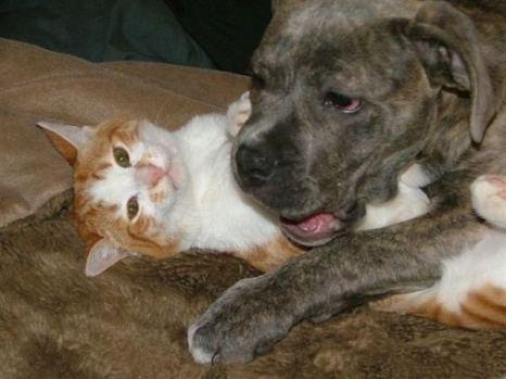 Ну, что ты на меня улегся, я маловат для подушки! Фото с сайта animalworld.com.ua