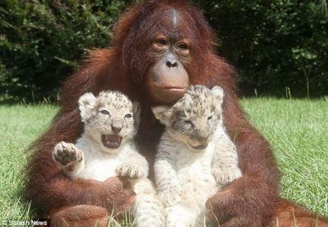 Хорошие у меня детки, только царапаются. Надо им «ногти» подстричь! Фото с сайта animalworld.com.ua