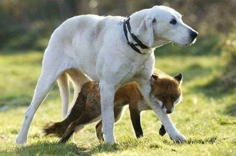 ержись рядом со мной. Тогда никто не сможет тебя обидеть! Фото с сайта animalworld.com.ua