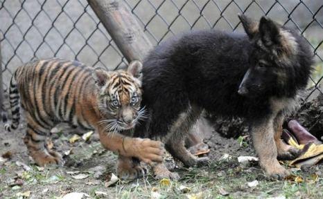 Ой, что это там, мама? Мне страшно… Фото с сайта animalworld.com.ua