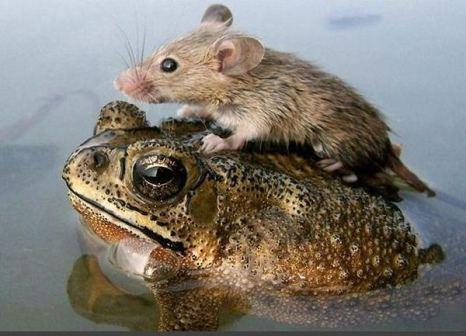 Сейчас сынок, переплывем… Фото с сайта animalworld.com.ua