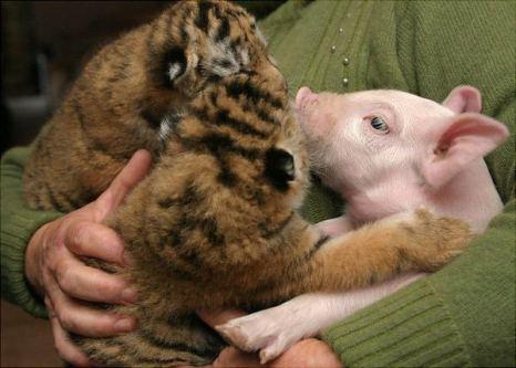 Ну что ты опять глаза закрыл, спишь на ходу… Фото с сайта animalworld.com.ua