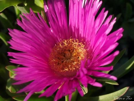 Говорящие цветы. Фото: Хава ТОР/Великая Эпоха