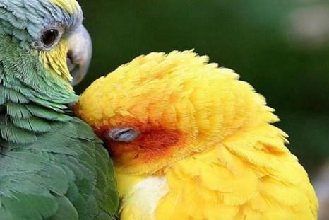 Вам сегодня грустно, не по себе? Фото с сайта ba-bamail