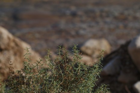 Путешествие к Мёртвому морю. У моря. Фото: Хава Тор/Великая Эпоха (The Epoch Times)