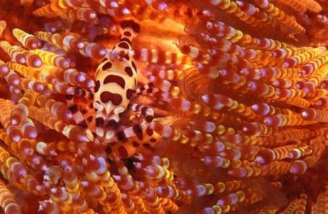 Жизнь – игра в прятки. Фото:xaxor.com