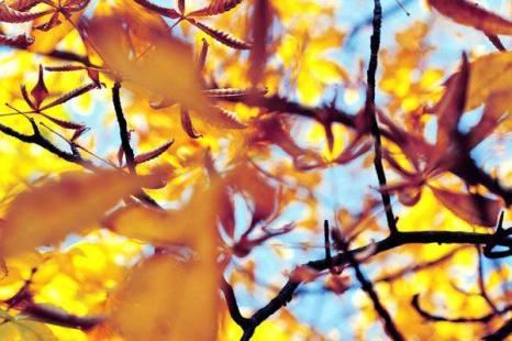 Капли в цветах, цвета в каплях.... Фото:xaxor.com