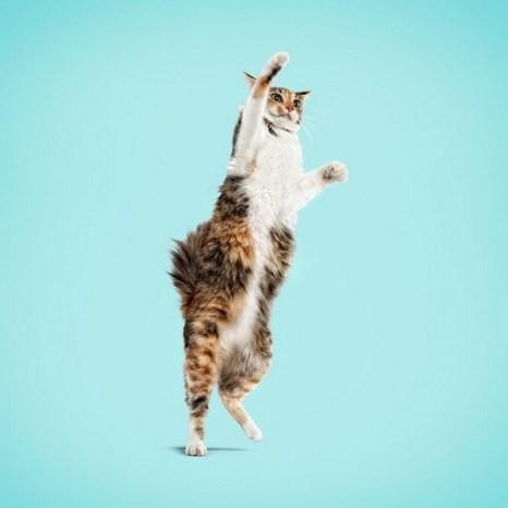 Забавные животные. Фото: xaxor.com