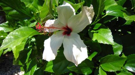 Кипр - море цветов ... и не только. Фото: Надежда Калинина