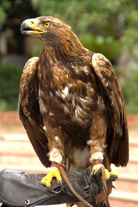 Ручной хищник в парке Фуншала. Мадейра. Фото: Сима Петрова/Великая Эпоха (The Epoch Times)