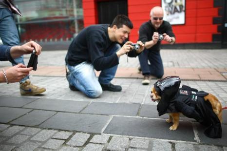 Люди фотографируют Харви, длинношерстного чихуахуа, одетого в образе Дарта Вейдера из фильма «Звездные Войны» на параде в Лондоне Фото: Jordan Mansfield/Getty Images