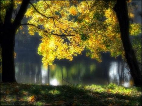 Осень размечталась... Фото: Игорь Громов-Дранкин