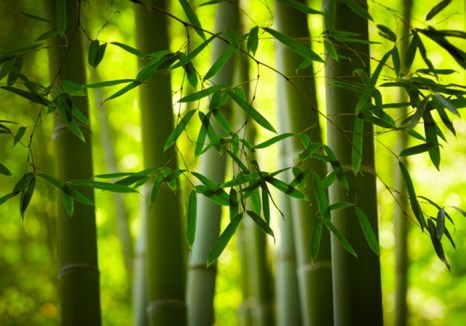 Ткань, рекламируемая как экологически чистый бамбуковый текстиль, на самом деле представляет собой вискозу из волокон бамбука. Вискоза — это синтетическое волокно, при производстве которого используется химическая обработка и вредные для окружающей среды технологии. Фото: Shutterstock*