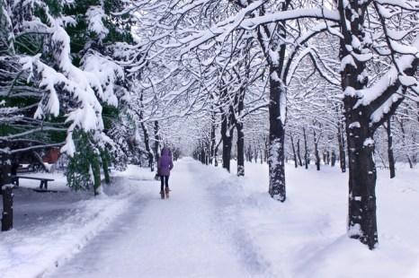 Снег… такое чудо нам дано. Фото: Ирина Рудская/Великая Эпоха (The Epoch Times)
