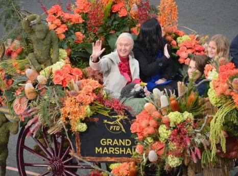 Всемирно известная борец за права диких животных доктора Джейн Гудолл на Параде роз в Калифорнии 1 января 2013 года. Фото: Alberto E. Rodriguez/Getty Images