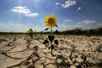 Засуха в Татарстане. Фото с сайта: images.yandex.ru