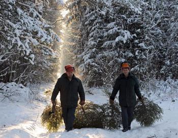 Новогодняя елка Кремля, главная елка страны, будет установлена 24 декабря. Фото: VIKTOR DRACHEV/AFP/Getty Images