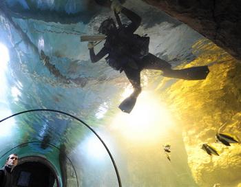 Московский океанариум. Фото РИА Новости