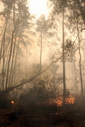 Лесной пожар. Фото: ANDREY SMIRNOV/AFP/Getty Images