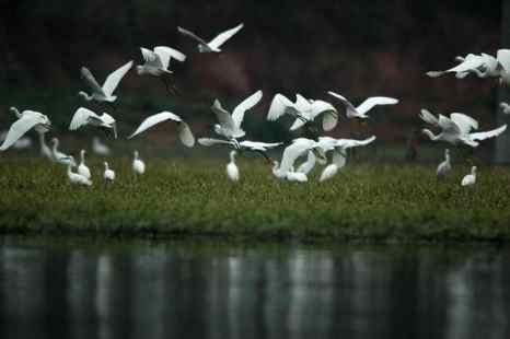 Перелётных птиц проверят на радиацию на Камчатке. Фото: AFP/Getty Images News