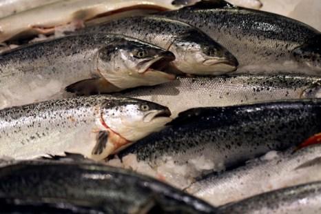За 11 месяцев этого года ввоз рыбы из Норвегии в Россию сократился примерно на 12% по сравнению с таким же периодом прошлого года. Фото: JOEL SAGET/AFP/Getty Images