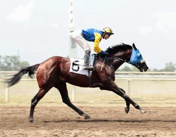 В Костроме проходит турнир по конному спорту. Фото: Александр Трушников/Великая Эпоха (The Epoch Times)