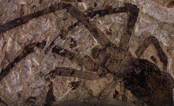 Древнейшая окаменелость самки  паука-золотопряда найдена в Китае. Фото с infox.ru