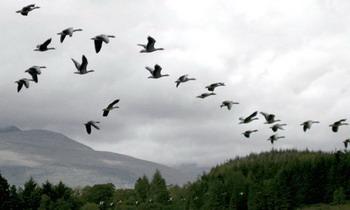 Оказывается и такое привычное всем явление, как навигация у птиц, описывается законами квантовой механики: свежая статья греческих учёных, исследующая эту возможность, выложена в открытый доступ на сайте ArXiv.org (Emily Fox/Deviantart.com).