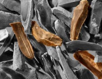 Ножи (коричневого цвета), найденные в пещере Кезем в Израиле. Фото: Ran Barkai/American Friends of Tel Aviv University