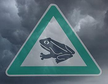 Дождь из рыб и лягушек: миф или реальность? Фото: Pixelquelle/STM