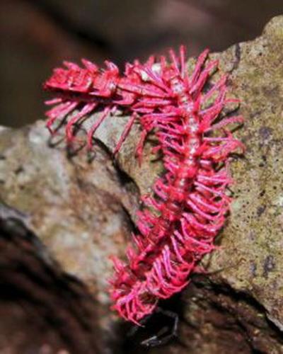 Об этих живых существах мы не знали. Фото с сайта ba-bamail
