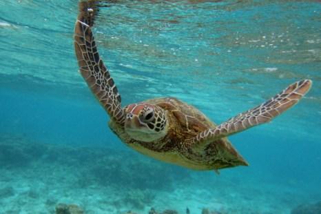 Ккоралловый риф Леди Эллиот (Lady Elliot Island). Фото: Mark Kolbe/Getty Images