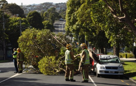 В Окленде в результате сильных ветров большое дерево упало на автомашину. Фото: Phil Walter/Getty Images