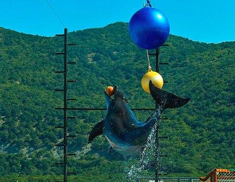 Анапский дельфинарий, находится в 20 км от курортного города Анапа в заповедной зоне на мысе Малый Утриш. фото: Darkenrau/commons.wikimedia.org