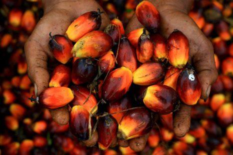 Семена пальмы. Фото: SUTANTA ADITYA/AFP/Getty Images