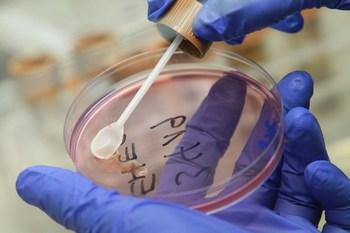 Кишечная инфекция E. COLI обнаружена во Франции. Фото: Sean Gallup/Getty Images