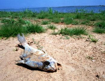Изменение климата угрожает жителям прибрежной зоны. Фото:   Joe Raedle/Newsmakers