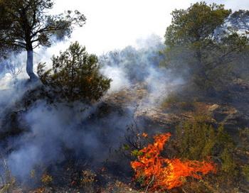 Лесные пожары. Фото:  JOSE JORDAN/AFP/GettyImages