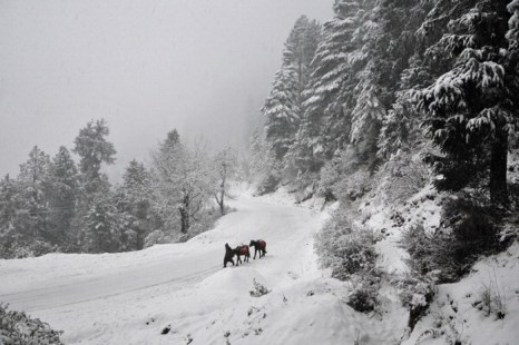 Зима. Фото:  STRDEL/AFP/Getty Images