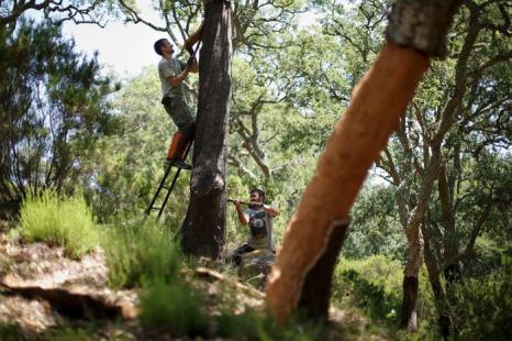 В Испании собрали кору с дубов для производства пробки, июль 2013 года. Фото: Pablo Blazquez Dominguez/Getty Images