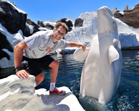 Фоторепортаж о белухе в  морском парке SeaWorld в Сан-Диего. Фото:Mike Aguilera/SeaWorld San Diego via Getty Images