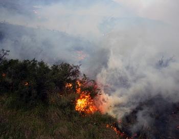Лесные пожары.  Фото:  FRANCISCO QUIROZ/AFP/Getty Images