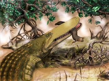 Предок сегодняшних крокодилов носил на голове щит. Фото: Henry Tsai/University of Missouri