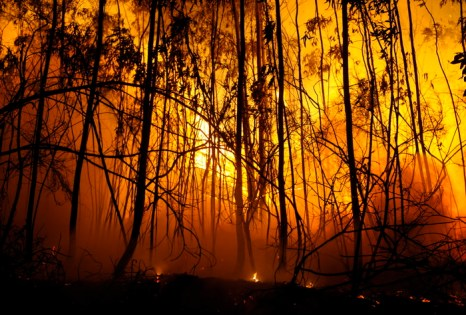 Лесные пожары продолжаются в Испании. Фото: MIGUEL RIOPA/AFP/Getty Images