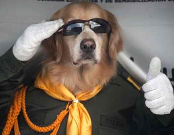 Житель США получил медицинский полис на имя своей собаки. Фото: RAUL ARBOLEDA/AFP/Getty Images